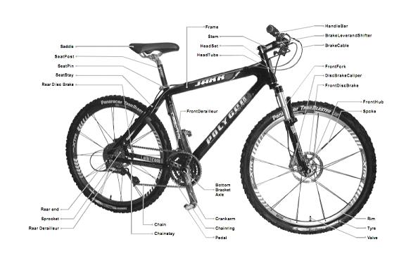 Bike Fitting Rodalink Bicycle Online Shop Singapore